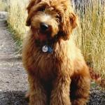 Taylor_puppy_2007_b