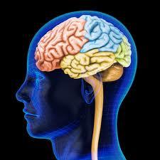 Hormones For Prostate Cancer Up Dementia Risk