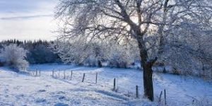 It's Easier To Lose Weight In Winter